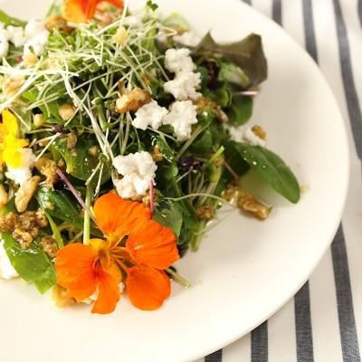 花はおいしい!ナスタチウムとスプラウトのサラダ