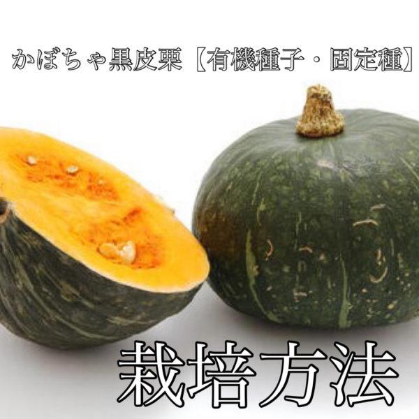 かぼちゃ黒皮栗【有機種子・固定種】 栽培方法
