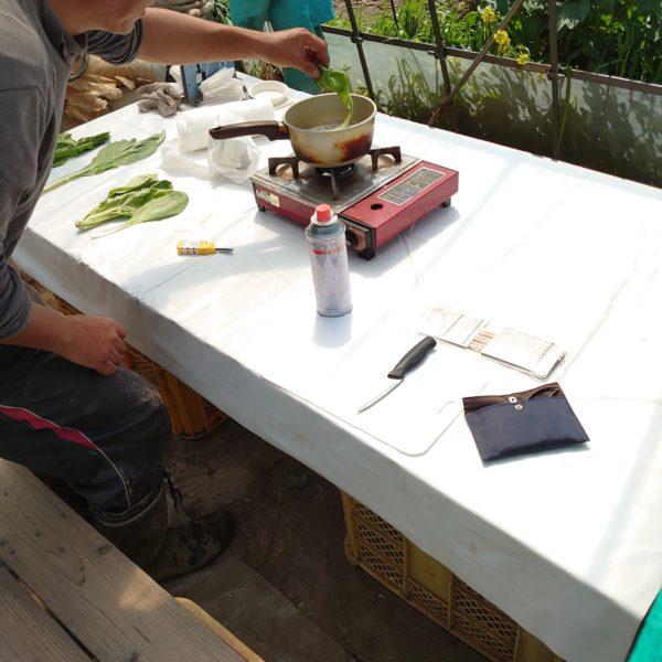 大阪しろ菜 関西在来種の種とり @茨城県取手市